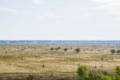 Un champ dans lequel rien ne se développe excepté des arbres images stock