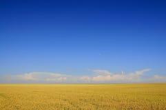 Un champ de blé Photo libre de droits