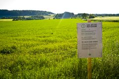 Un champ de chanvre dans Hesse, m Allemagne Culture juridique de chanvre pour la médecine ou la nourriture images stock
