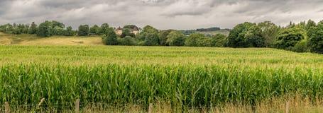 Un champ de maïs avec une maison de ferme dans la distance photos stock