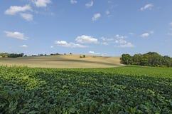 Un champ des betteraves avec une colline scénique Image stock