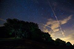 Un champ et un groupe allumé d'arbres la nuit Photographie stock libre de droits
