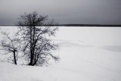 Un champ neigeux avec un ciel gris et un arbre isolé photographie stock