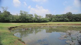 un champ parfait de terrain de golf d'herbe au HK banque de vidéos
