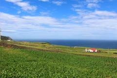 Un champ verdoyant donnant sur l'océan Images stock