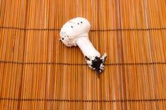 Un champignon Photos libres de droits