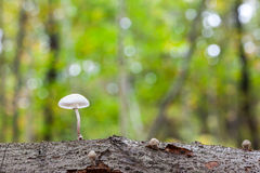 Un champignon de porcelaine Images stock