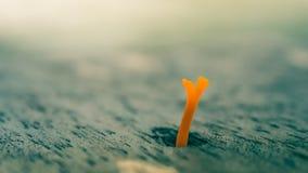 Un champignon fongueux jaune Image stock