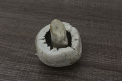 Un champignon simple Image stock