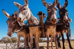 Un chariot d'âne dans Opuwo, Namibie en Afrique photo stock