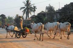 Un chariot d'équitation d'homme images libres de droits