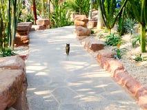 Un chat à l'intérieur de serre chaude tropicale d'exposition Photo stock