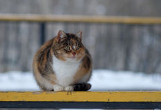 Un chat égaré sur un banc en parc Photo stock