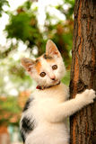Un chat étant perché dans un arbre Image libre de droits