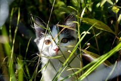 Un chat Images libres de droits
