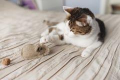Un chat adulte rayé se trouve sur le lit et jouer la souris de jouet photos libres de droits