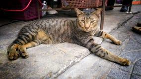 Un chat a appelé Tiger les yeux somnolents sur la rue Image stock