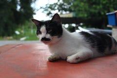 Un chat avec la moustache et le fond mignons de bokeh Photo libre de droits
