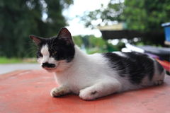 Un chat avec la moustache et le fond mignons de bokeh Photographie stock libre de droits