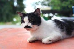 Un chat avec la moustache et le fond mignons de bokeh Photos libres de droits