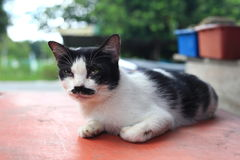Un chat avec la moustache et le fond mignons de bokeh Photo stock