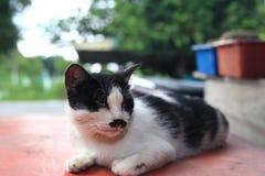 Un chat avec la moustache et le fond mignons de bokeh Images libres de droits