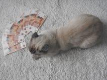 Un chat blanc est joué avec l'argent, un fond brouillé photo stock