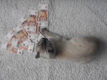 Un chat blanc est joué avec l'argent, un fond brouillé photos stock