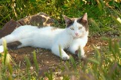 Un chat blanc se trouve au sol dans l'herbe et regarde devant Images stock
