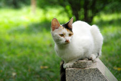 Un chat blanc, un chat Images libres de droits