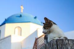 Un chat contre une église grecque d'orthodoc photos libres de droits