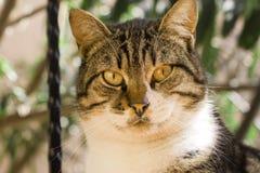 Un chat curieux de rue image libre de droits