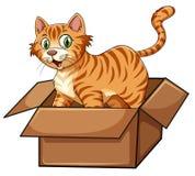 Un chat dans la boîte illustration stock