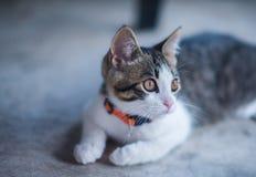 Un chat dans la concentration enthumansiaste images libres de droits