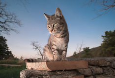 Un chat dans le jardin Photo libre de droits