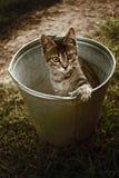 Un chat dans un seau Photographie stock