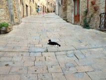 Un chat dans Volterra photo libre de droits