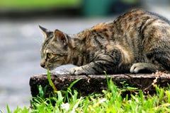 un chat de cutie trouvant sa cible photographie stock libre de droits
