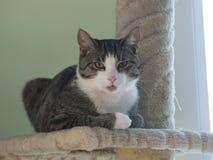 Un chat de ménage se repose sur un courrier s'élevant Image stock
