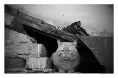 Un chat de rue dans le style noir et blanc Images libres de droits
