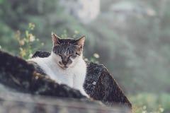 Un chat de sommeil image stock