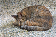 Un chat de sommeil Photos stock