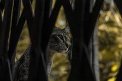 Un chat derrière la porte Photos libres de droits