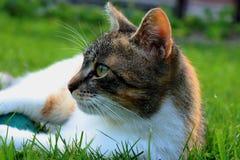 Un chat domestique détendant sur le jardin après avoir chassé la petite souris et avoir joué avec la boule photos libres de droits