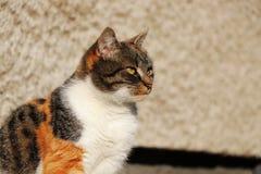 Un chat domestique de beau visage se reposant sur la poubelle en plastique dans extérieur Elle a très pour concentrer l'expresion image libre de droits