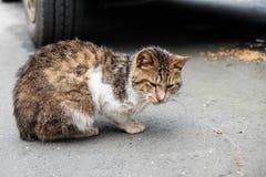 Un chat en parc Image stock