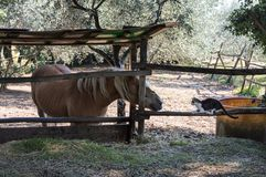 Un chat et un cheval Photos stock