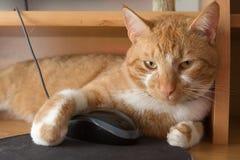 Un chat et une souris Photo stock