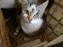 Un chat gentil image libre de droits