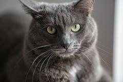 Un chat gris mignon se trouve au soleil le ` s rayonne et regarde sérieusement dans Photos stock